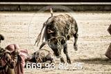 Fotografía toreros. - foto