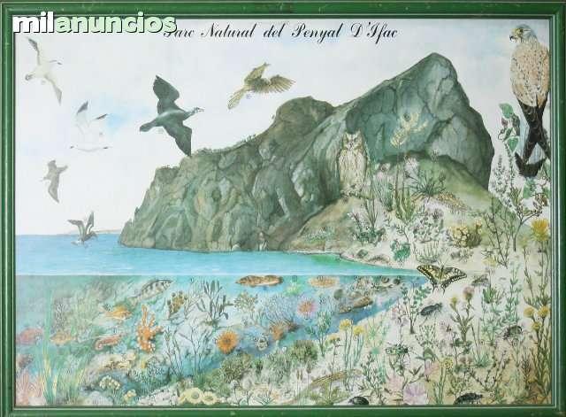 Cartel, flora y fauna del peÑÓn de ifach - foto 1