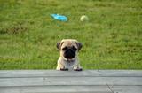 Significado De Soñar Con Perros Tranquil - foto