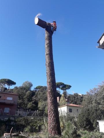 Desbroce de parcelas y tala de árboles - foto 1