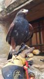 problemas con aves??? - foto