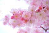 Busco floristería - foto