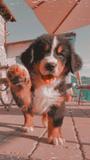 Cuidado y paseo a perros - foto