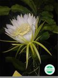 Todo tipo de flores y de plantas - foto