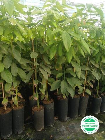 Plantas de temporada - foto 1