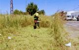Limpieza de hierbas      - foto