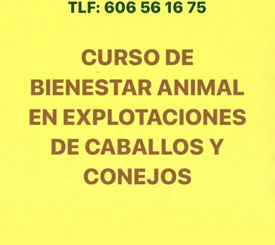 curso bienestar animal caballos/conejos - foto 1
