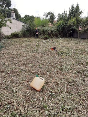Servicios jardineria desbroce poda tala - foto 1