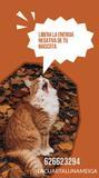 lectura de tarot para tu perro 62662329 - foto