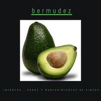 Daniel bermudez